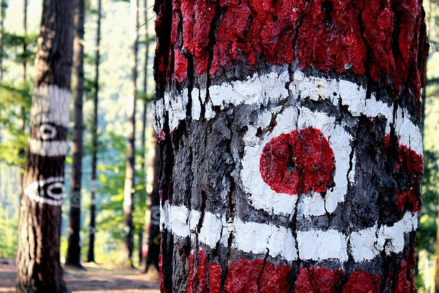bosque_oma-turomaquia