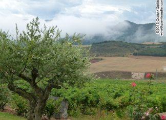 """Vistas de viñedos en """"Tierra Estella"""""""