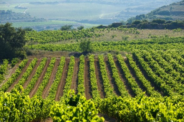 Viñedos de Rioja alavesa, vistos desde  Samaniego