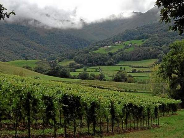 Take time to hike through the Irouleguy vineyards in the Pyrenees. (Staff Photo by Larry Wilson)