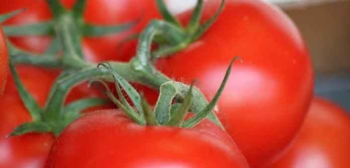 Estudio de la UPV/EHU sobre la concentración de contaminantes en los tomates