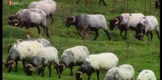 """Un documental del canal público en alemán SAT3 en el que se hace un recorrido de """"punta a unta"""" a la Comunidad Foral de Navarra"""