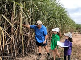 Ayr sugar cane grower Frank Mugica is teaching his daughters so they can inherit the family business. (ABC: Dwayne Wyles)