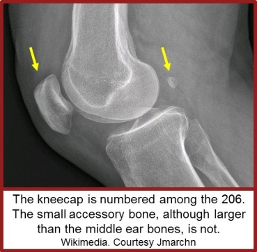 17-10-31 sesamoids knee