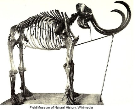17-11-14 mammoth skeleton