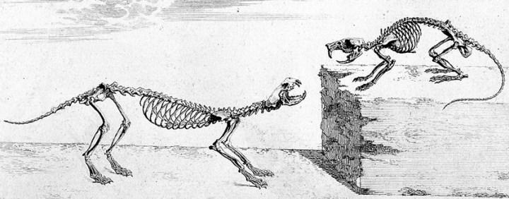 17-12-12 Cheselden dog cat