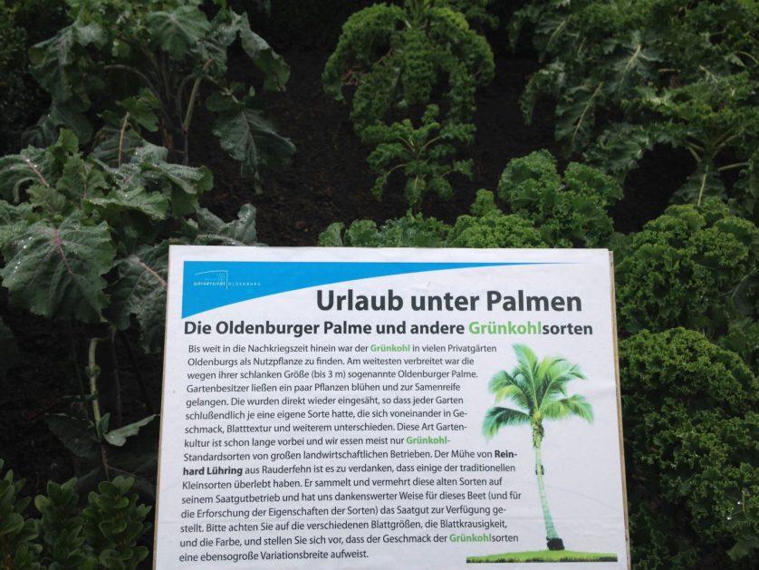Das Grünkohl-Schaubeet im öffentlichen Teil des Botanischen Gartens.