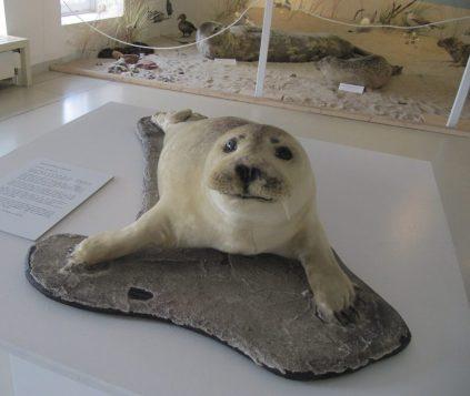 Ausstellung im Wattenmeer Besucherzentrum