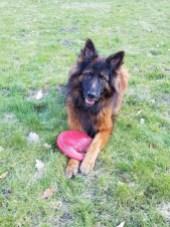 Endlich hat Luna genug Platz zum Frisbee spielen © Barbara