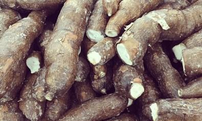 Kamoteng Kahoy (Cassava)