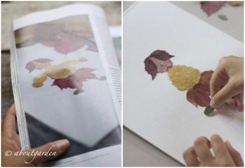 autunno di foglie  aboutgarden
