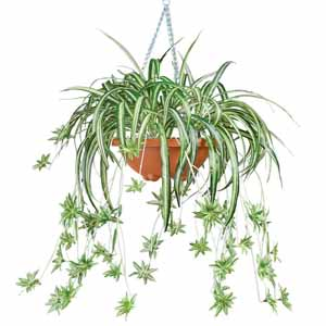 Collections Etc Artificial Spider Plant Fake Greenery