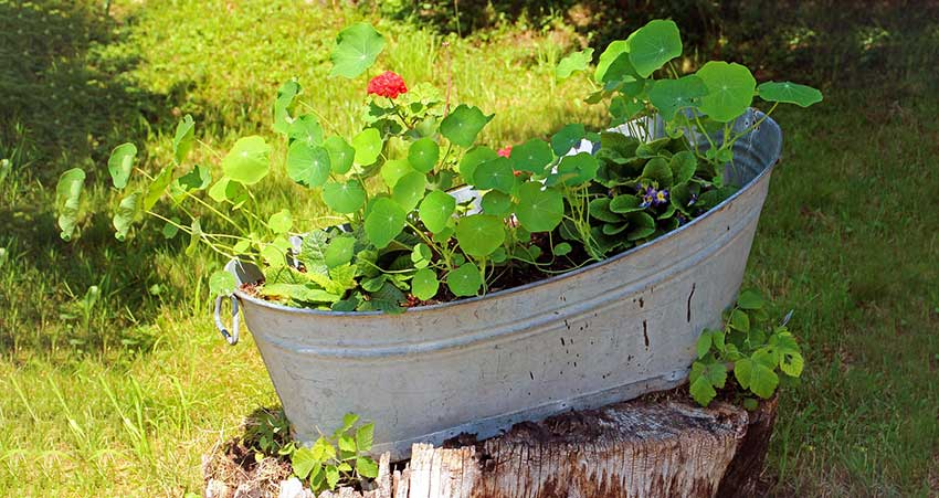 How to Decorate Garden with Waste Material