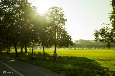 Sunny day at the Meadows