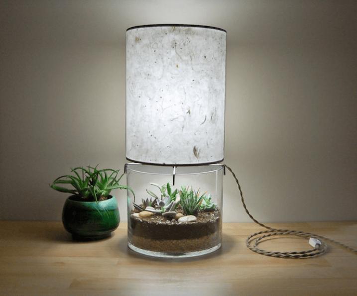 A terrarium-light combination