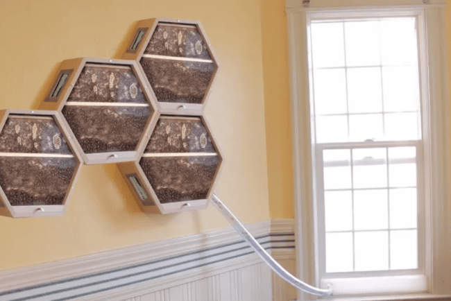The Modular Bee Colony BEEcosystem Can Be Placed Inside