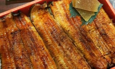 Japanese eel