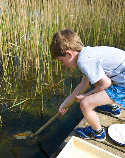 Pond dipping - 50 Things to Do Before You're 11¾