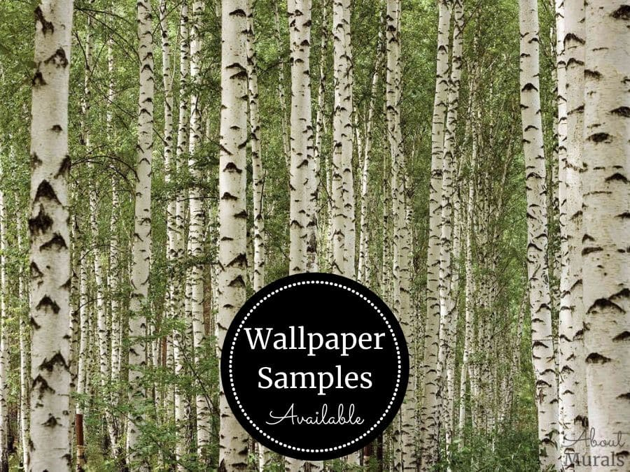 A green birch forest wallpaper sample from AboutMurals.ca