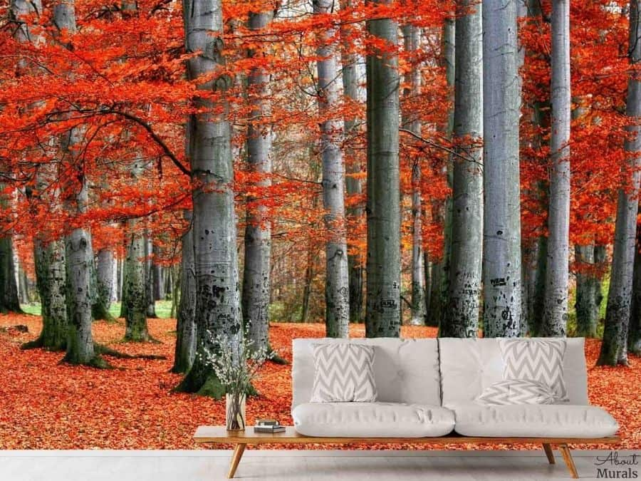 Red Forest Wallpaper, as seen on the walls of this red and grey living room, feels warm with its vibrant beech trees in fall. Autumn forest wallpaper sold by AboutMurals.ca.