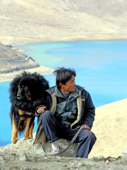 A tibetan with his guarding dog