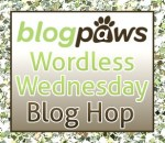 Blog Paws Wordless Wednesday