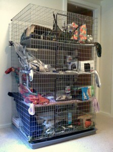 Choosing Your Pet Rats' Home | About Pet Rats