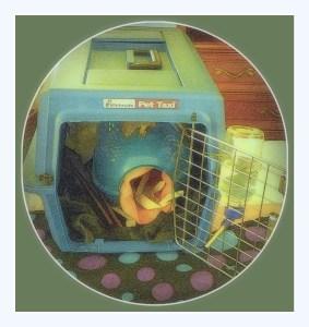 #pet rat carrier #pet rats #rats #pet rat care #pet rat cage cleaning
