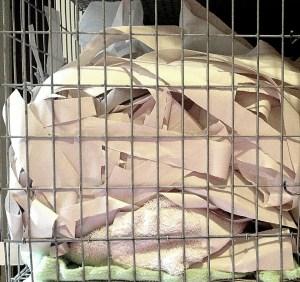 about pet rats, pet rats, pet rat, rats, rat, fancy rats, fancy rat, ratties, rattie, pet rat care, pet rat info, pet rat information, pet rat supplies, pet rat cage, pet rat cage interior, what to put inside your pet rat cage, pet rat cage décor, pet rat bedding, plain newsprint, pet rat newsprint