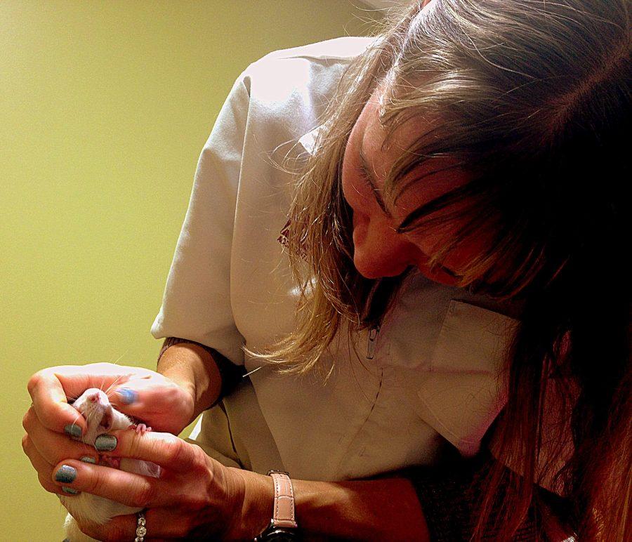 pet rat teeth exam