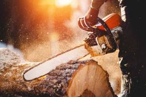 chainsaw for firewood