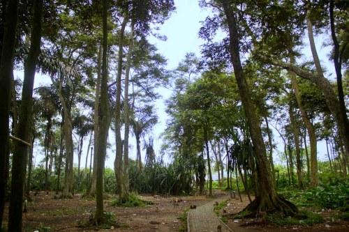 Hutan Monyet Kramat Solear