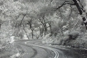 Photo graph of road curving through trees