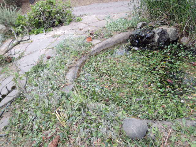 pond littered with debris
