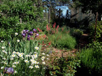 Red poker plant, purple irises, white daisys