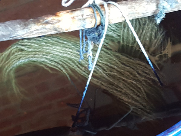 Dipping the skein into the indigo pot