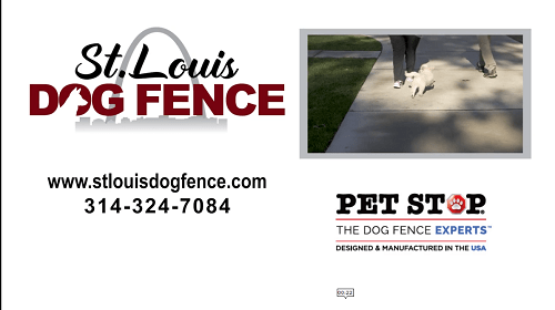 St. Louis Dog Fence Intro