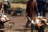 Bird Flu – FG Begins Sensitization of FCT Poultry Farmers, Sellers