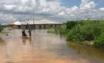 Flood-Destroyed-Rice-Farms-in-Nigeria-300x183