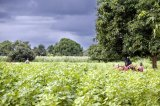 A Switch To Ecological Farming Will Benefit Health and Environment – Report