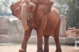 Girl Killed By Zoo Elephant