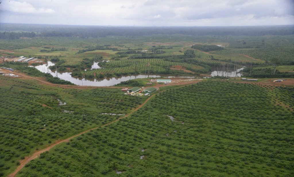 Oil palm plantations, like this one in Kango being developed by Singaporean firm Olam, are part of a government drive to make Gabon an emerging economy by 2025. Photograph: Xavier Bourgois/AFP/Getty Images