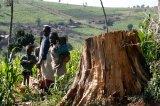 Kenya's Ogiek People Are Seeing Their Land Rights 'Brutalised'