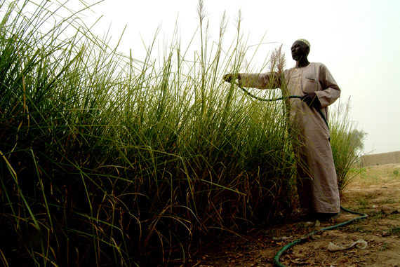 A farmer waters grass at a research centre that works to regenerate endangered native species and introduce varieties that are better adapted to hotter, drier conditions in Mopti, Mali. ©IFAD/Amadou Keita