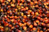 Palm Oil In Focus As Swiss Vote On Trade Pact With Indonesia