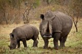 Namibia: Three Charged Over Killing of Rhinos