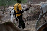 Herdsmen Kidnap 3 teachers In Edo, Demand N10