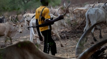 Benue Groups Kick Over N170 Billion Vote For Cattle Ranches