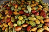Ghana to Produce Biggest Cocoa Crop in Three Years