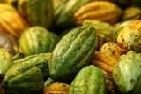 U.S. Backs Ivory Coast Project to Produce Power From Cocoa Waste